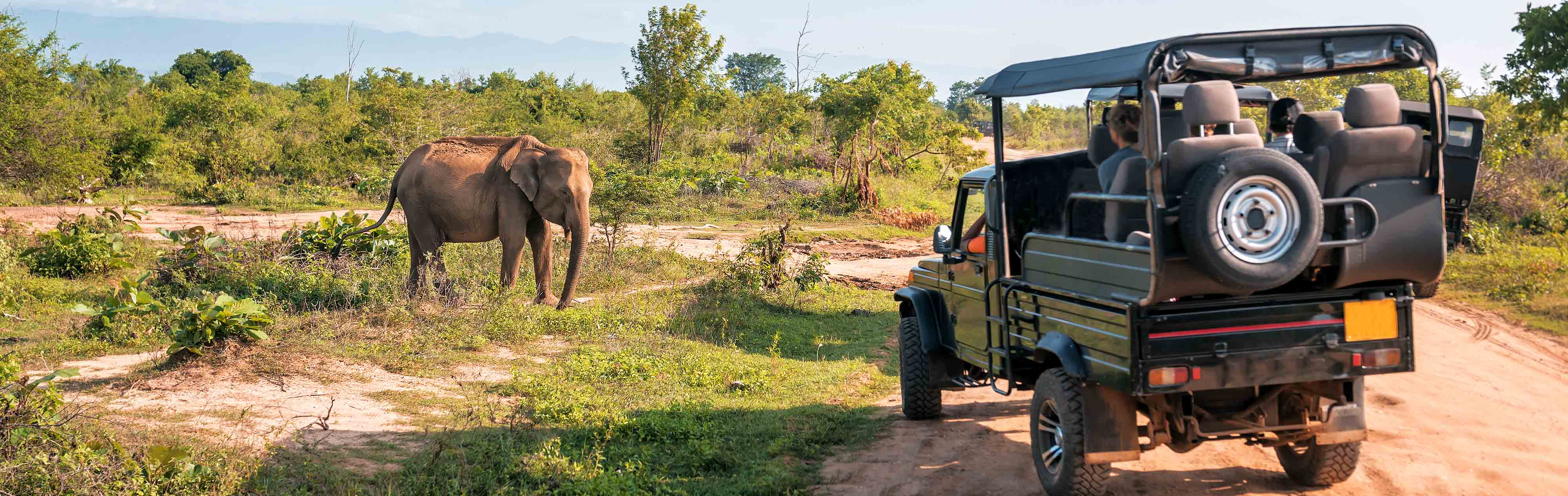 Yala National Park Safari